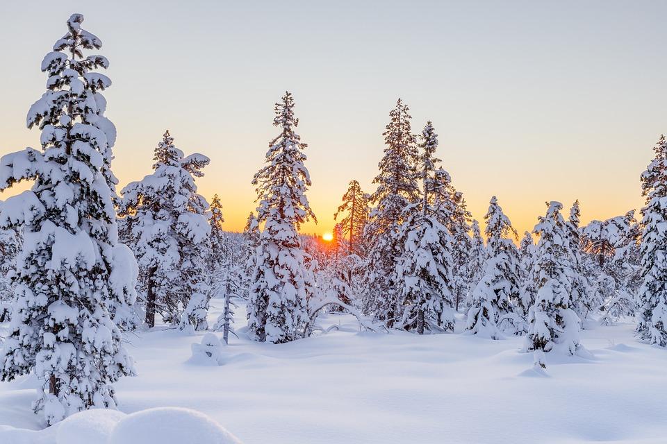 Winter, Conifers, Sunset, Snow, Snowy, Hoarfrost