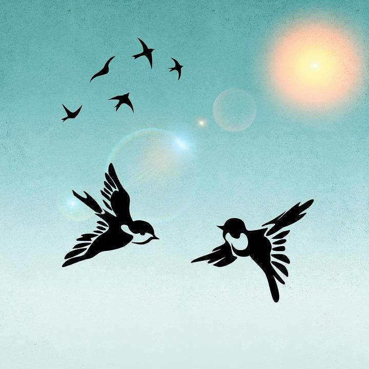 Birds, Bird, Pair, Sunshine, Background