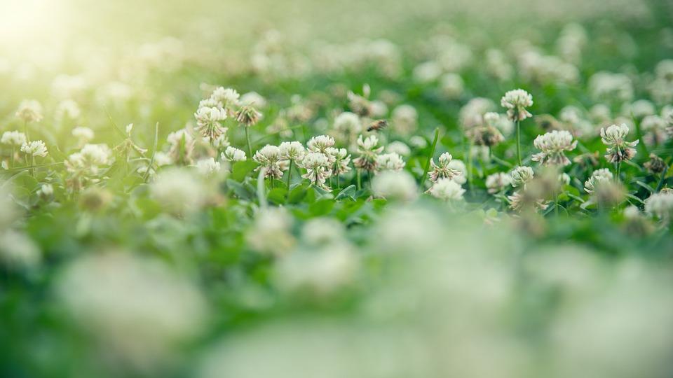 Grassland, Flowers, Sunshine