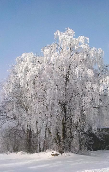 Tree, Frost, Winter, Sunshine, Cold, Hoarfrost