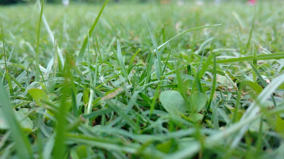Grass, Green, Sunshine