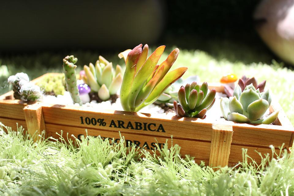 The Fleshy, Plant, Sunshine, Green