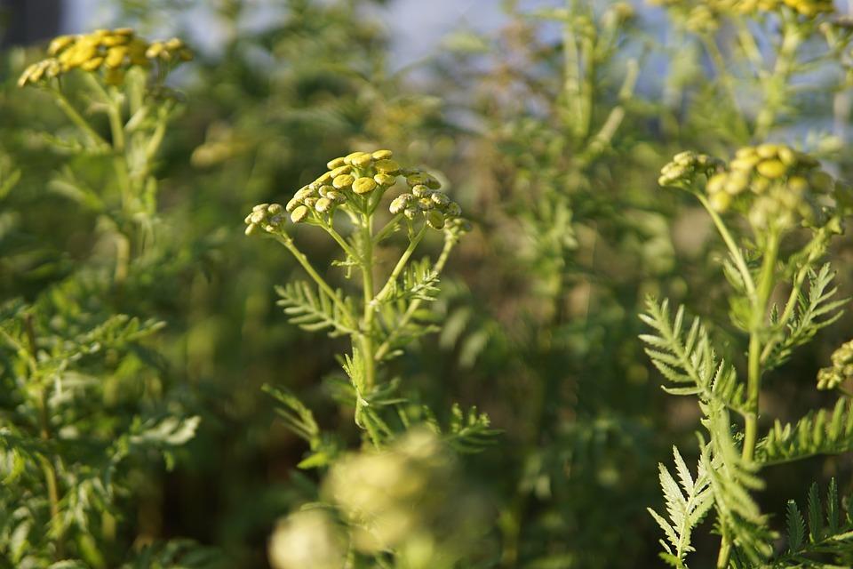 Wild Flowers, Yellow, Flowers, Green, Sun, Sunshine