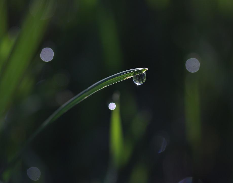 Grass, Dew, Green, Drops, Bokeh, Water, Wet, Supplies