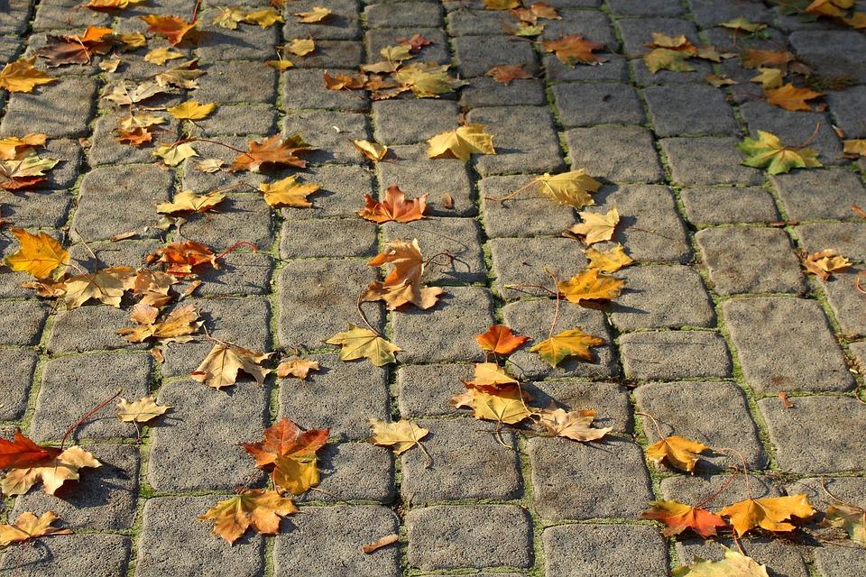 Walkway, Pavers, Pavement, Foliage, Autumn, Surface