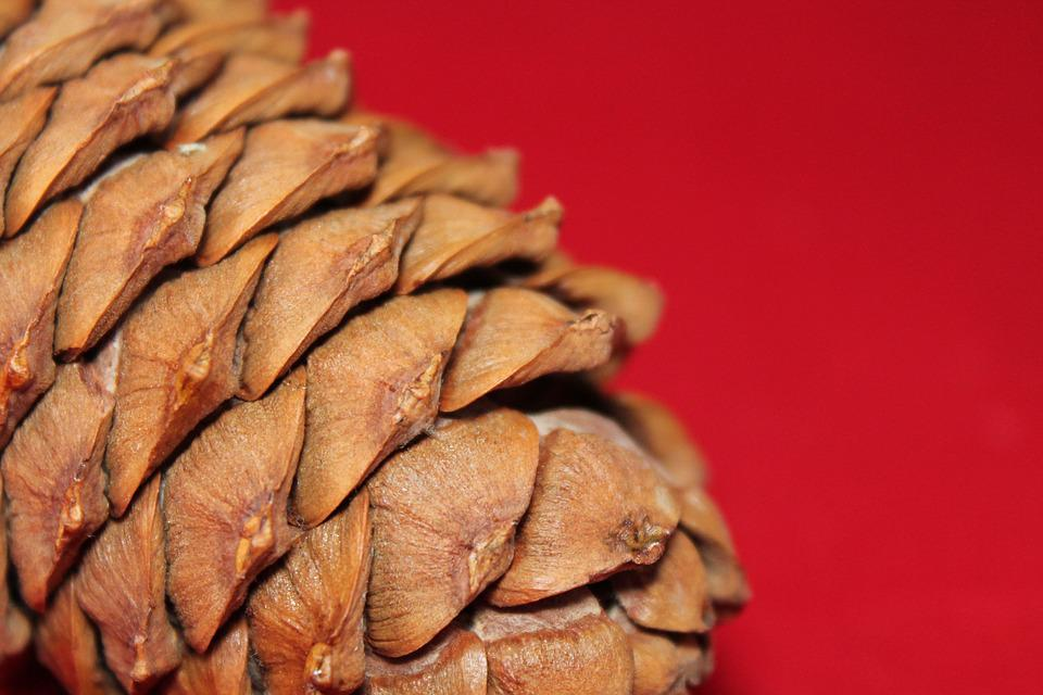 Pine Cone, Tree, Nature, Surface, Scales, Brown