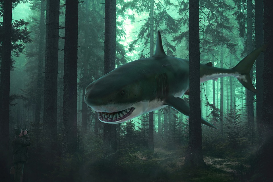 Forest, Shark, Trees, Surreal, Fantasy, Woods