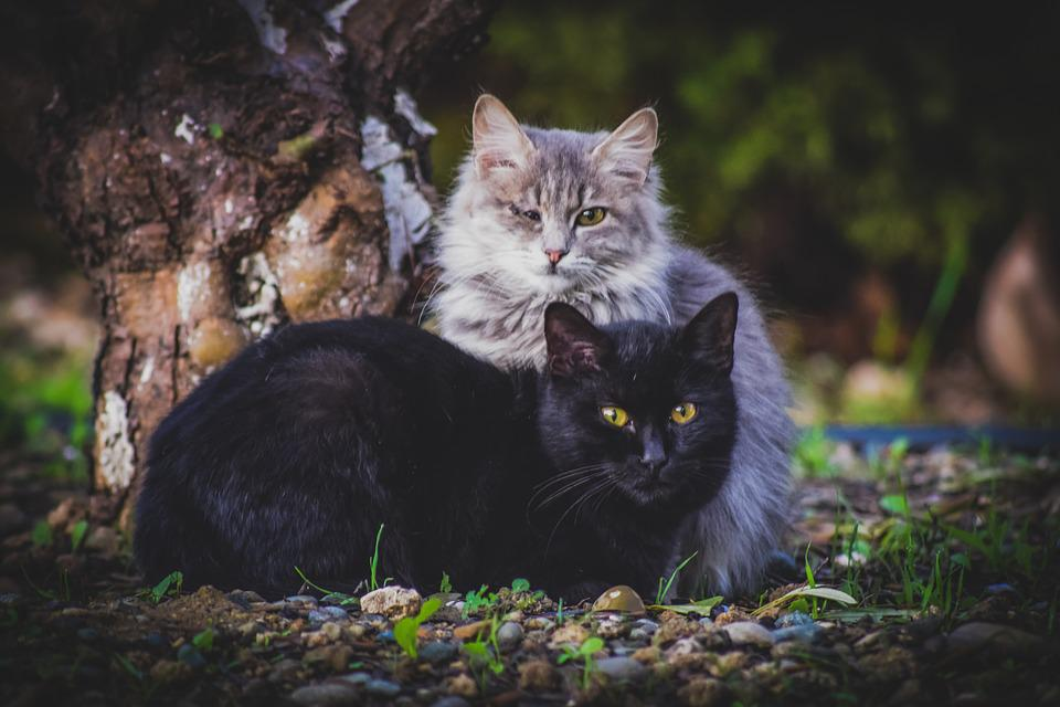 Cats, Stray, Animal, Curious, Suspicious, Homeless