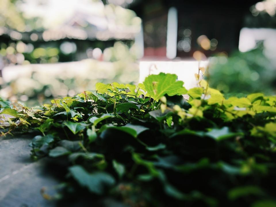 Lotus, Garden, Plant, Suzhou