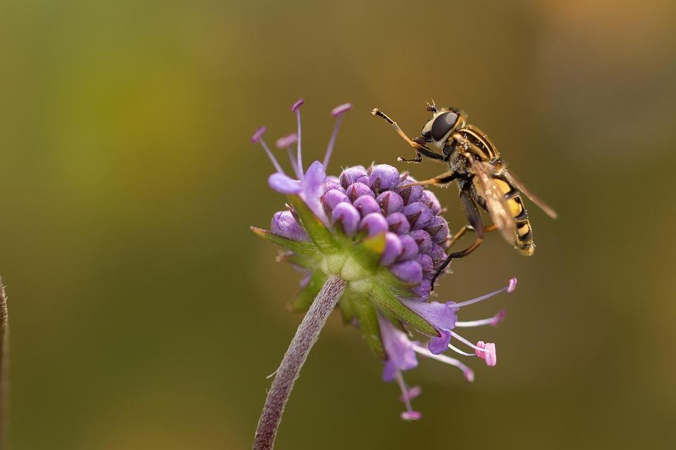 Moorabbis, Swamp, Marsh Plant, Blossom, Bloom, Hoverfly