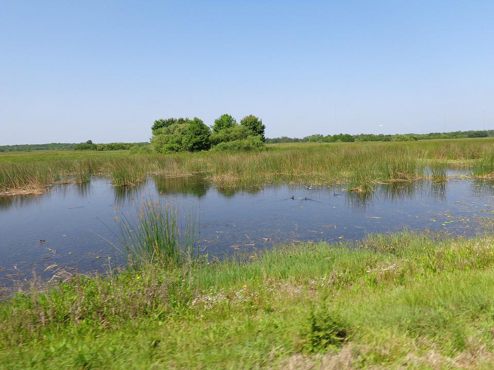 Wetland, Nature, Landscape, Marsh, Swamp, Meadow