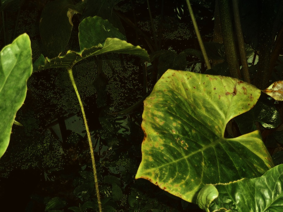 Jungle, Dark, Plant, Green, Nature, Water, Swamp