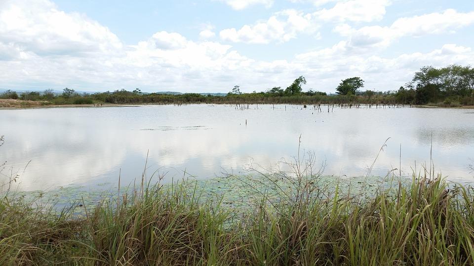 Lake, Swamp, Scenery