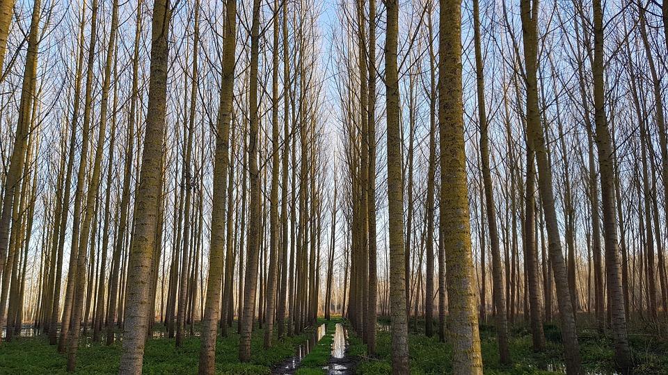 Trees, Swamp, Nature, Wetland