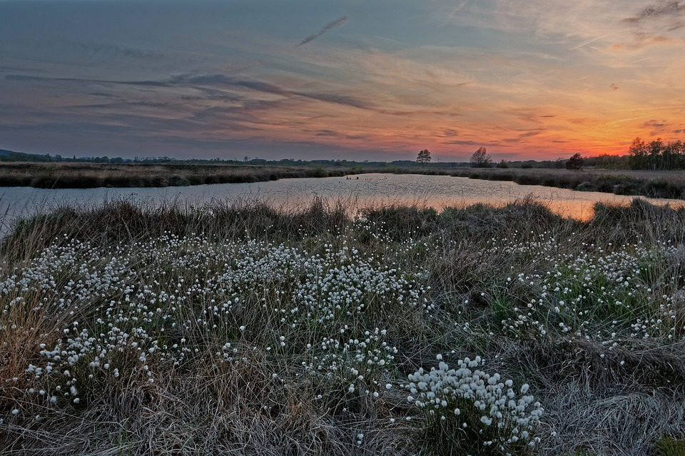 Moor, Peat Bog, Moor Grass, Nature Reserve, Swampy