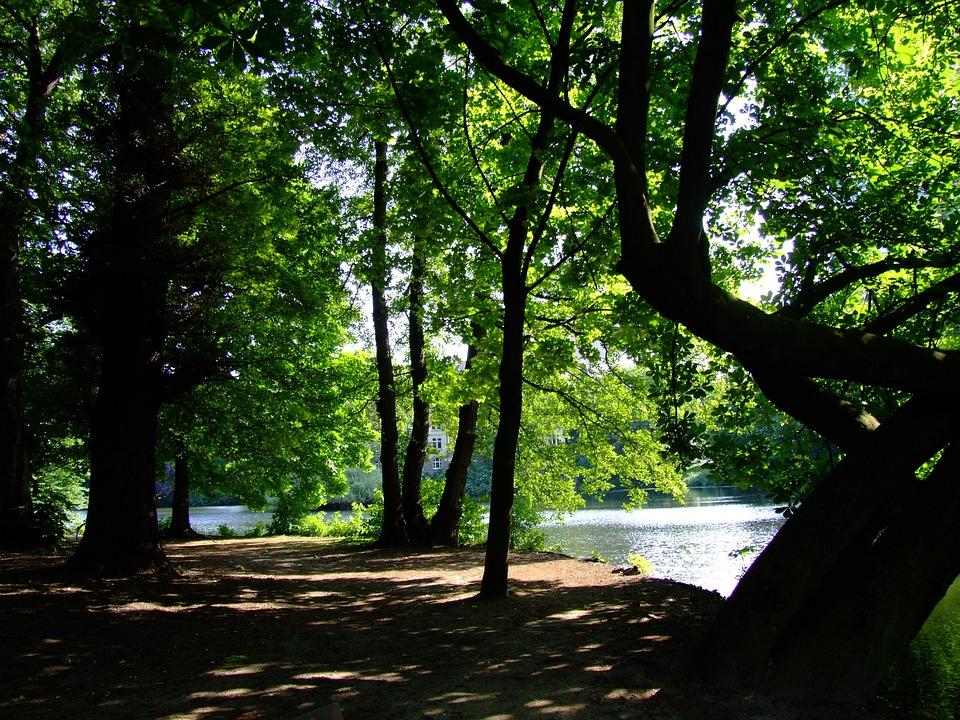 Park, Swan Mirror, Düsseldorf, Idyll, Rest, Recovery