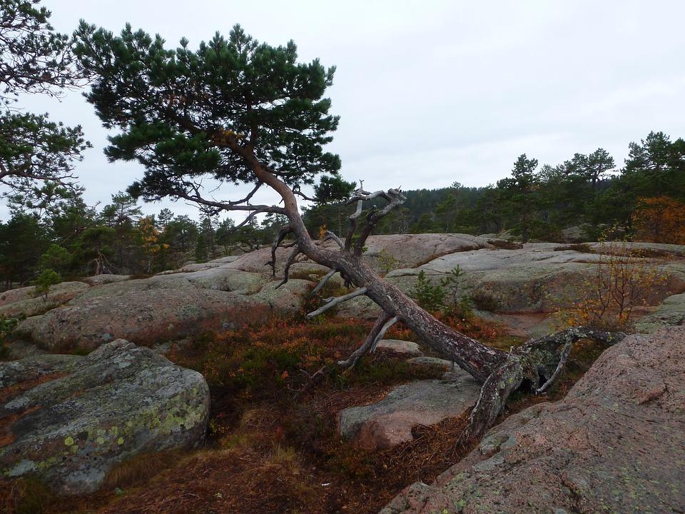 Skuleskogen National Park, Sweden, Hike