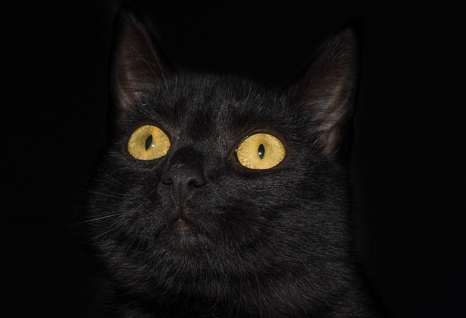 Cat, Eyes, Yellow, Pet, Sweet, Isolated, Black
