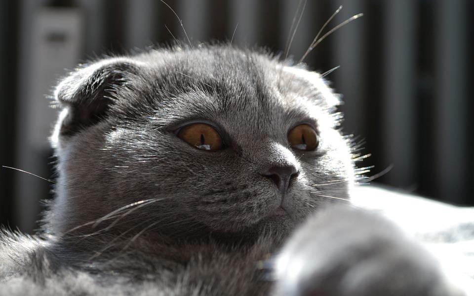 Cat, Kitten, Pet, Mieze, Cute, Sweet, Young Cat