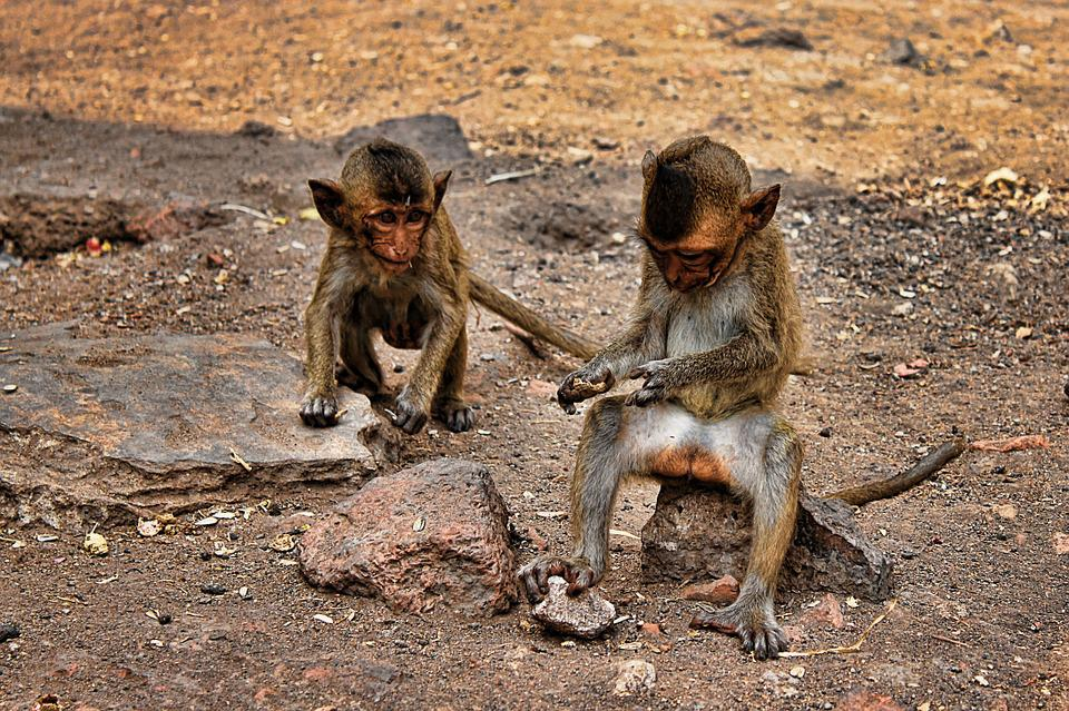 Ape, Thailand, Young Monkeys, Sweet, Sand, Nature