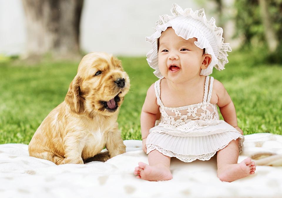Free Photo Sweet Puppies Pet Baby Dog Animal Puppy Cute Max Pixel