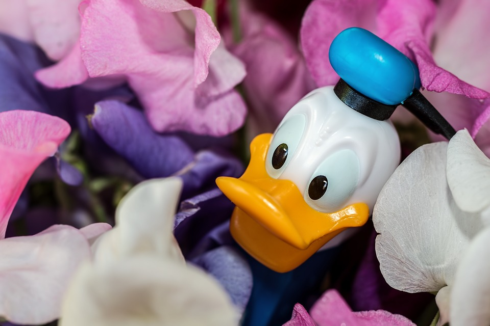Donald Duck, Disney Character, Sweet-pea, Flowers