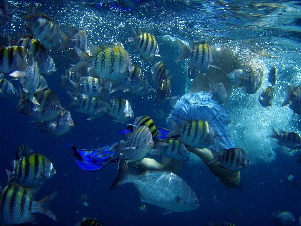 Diving, Underwater, Fish, Sea, Swim, Man, Fins, Aruba