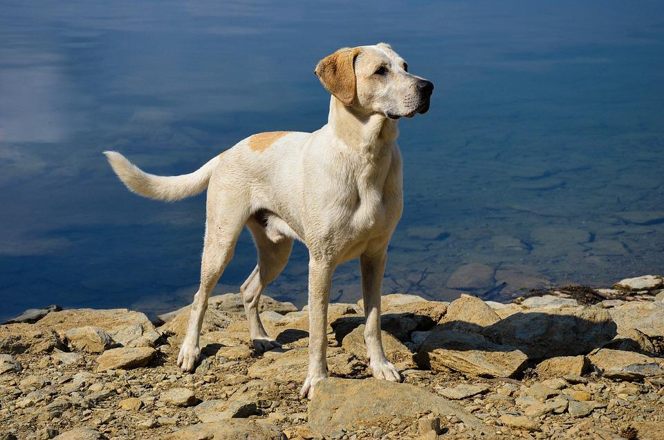 Dog, Water, Beautiful, Pet, Swim, Summer, Hot, Play