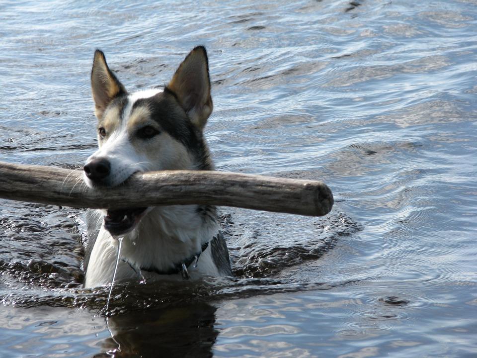 Dog, Swim, Intake