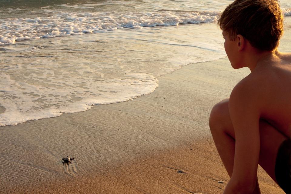 Goodbye, Beginnings, Turtle, Life, Swim, Nature