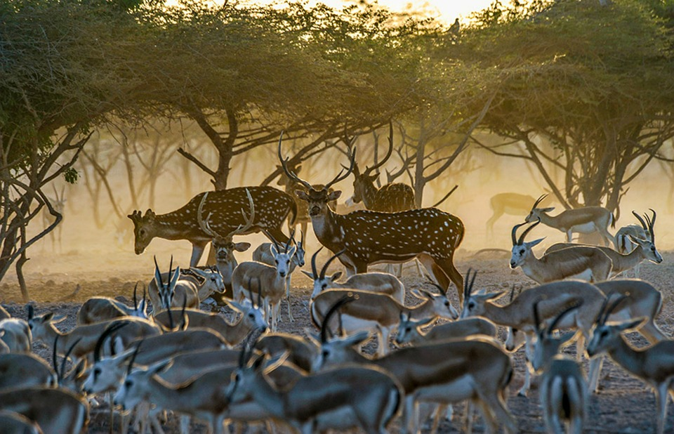 Animals, Nature, Fauna, Wildlife, Swim