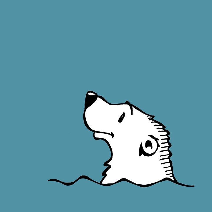 Polar Bear, Water, Sea, Arctic, Blue, Swimming