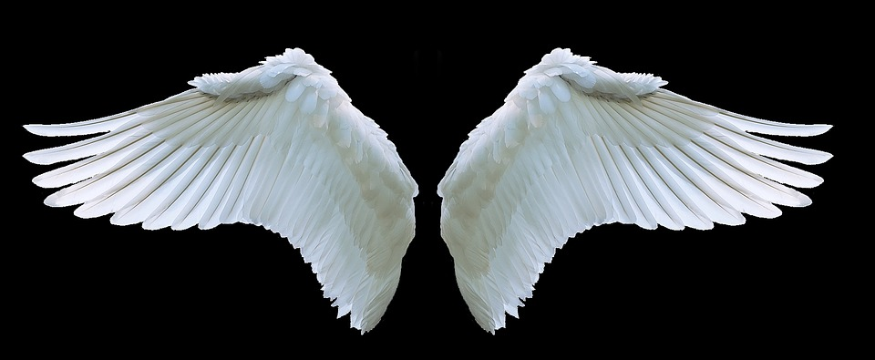 Wing, Angel, Swan, White, Swing, Feather, Symbol