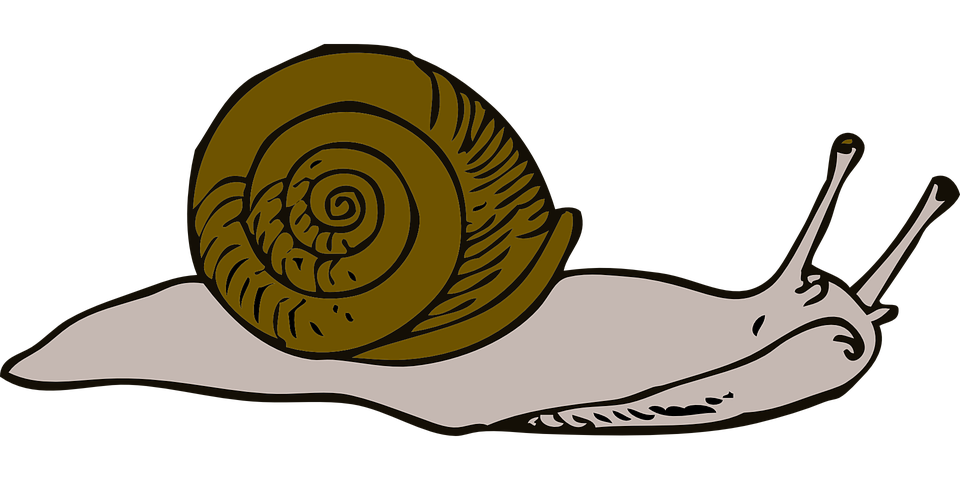 Move, Snail, Long, Shell, Swirl, Slow, Moving, Small