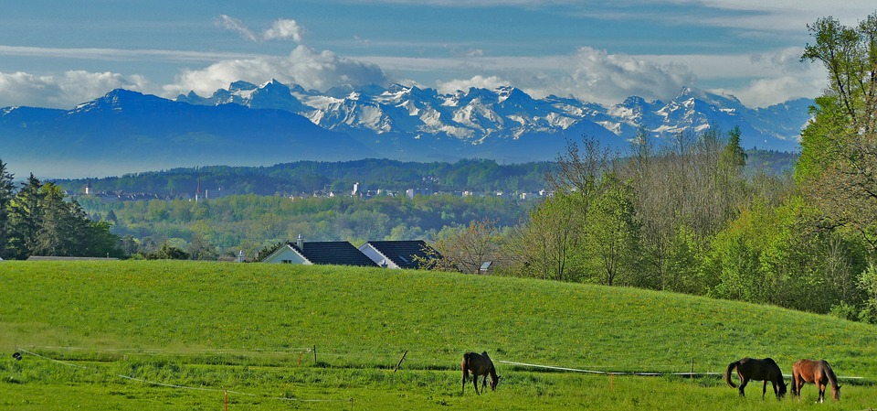 Landscape, Switzerland, Aargau, Nature, Meadow