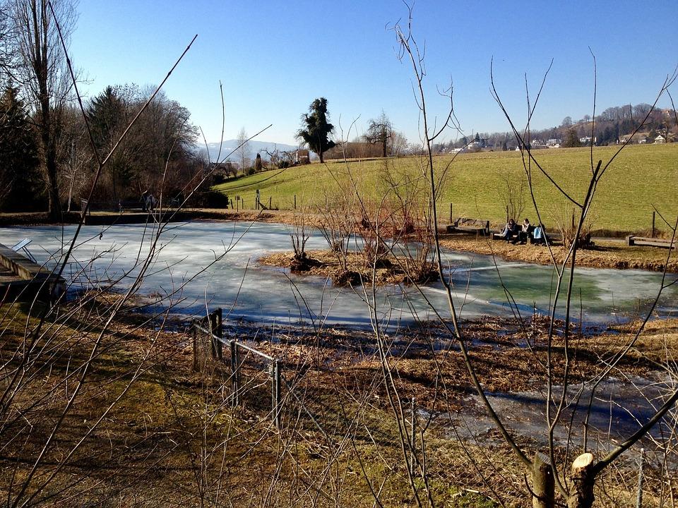 Pond, Frozen, Winter, Uetikon Am See, Switzerland, Cold