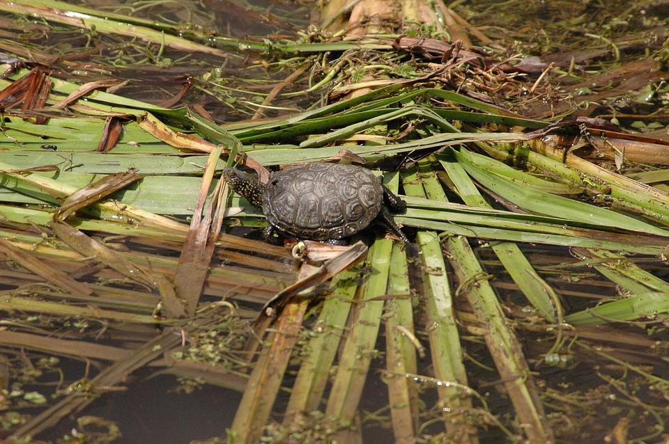 Warty Turtles, Sword-extract Stream