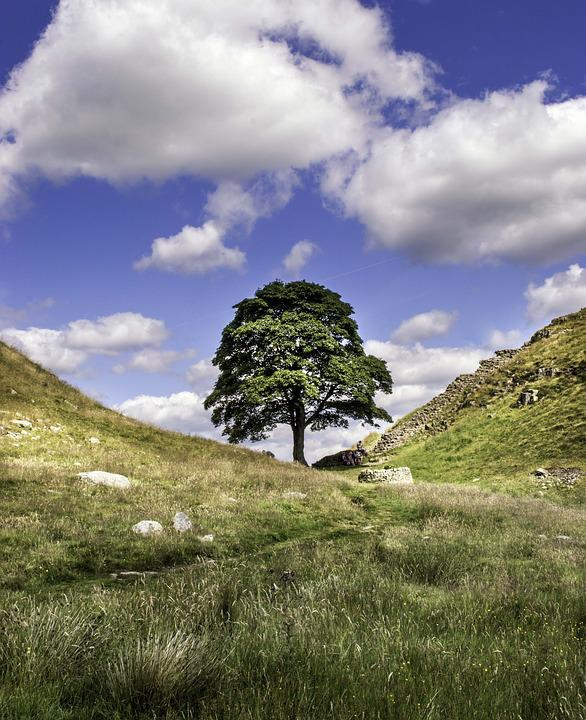 Sycamore Gap, Robin Hood, Northumberland, Landscape