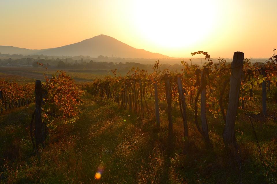 Dawn, Szársomlyó, Baranya, Grape, Mountain, Red, Orange