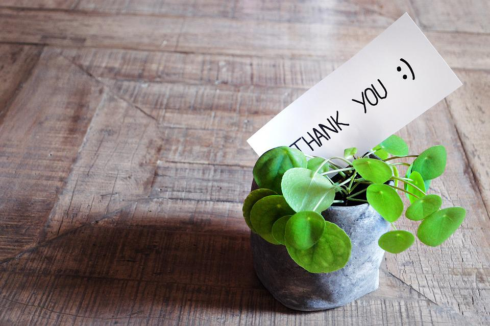 Thank You, Thank You Card, Table, Plant, Pot, Modern