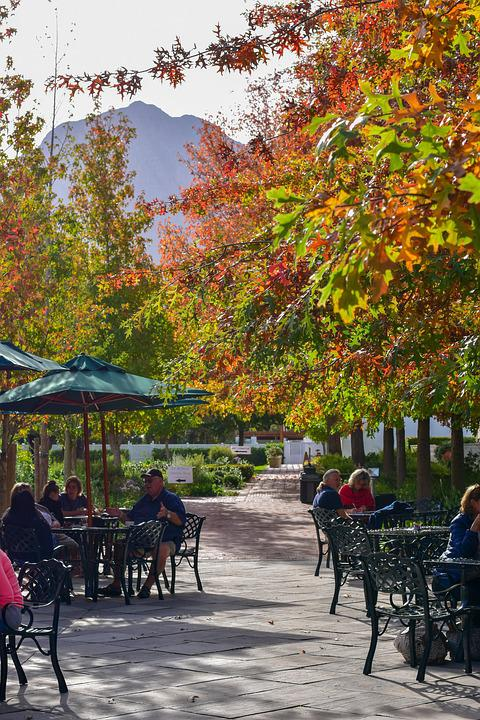 Trees, Leaves, Table, Colorful, Chairs, Umbrella