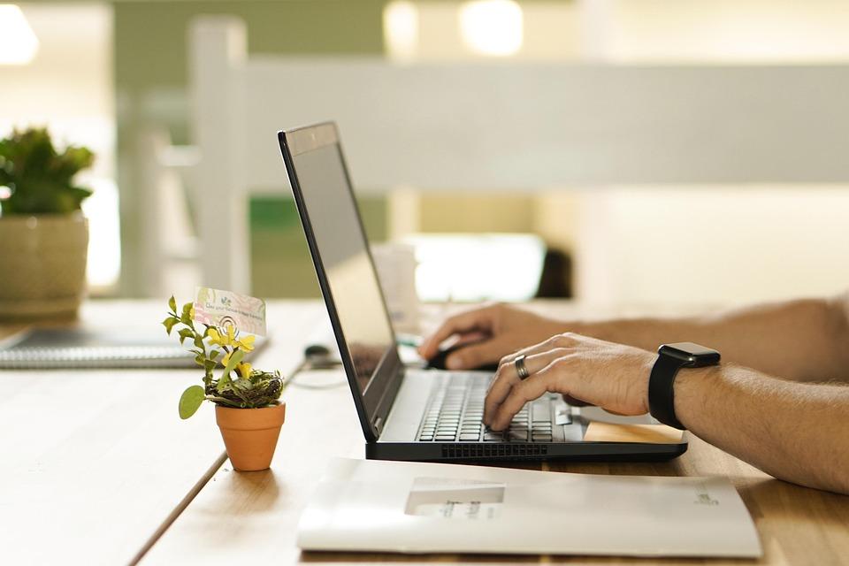 Plant, Workstation, Laptop, Pot, Work, Table