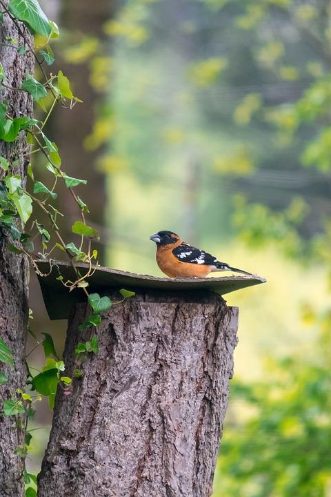 Nature, Bird, Outdoors, Tree, Wildlife, Finch, Tacoma