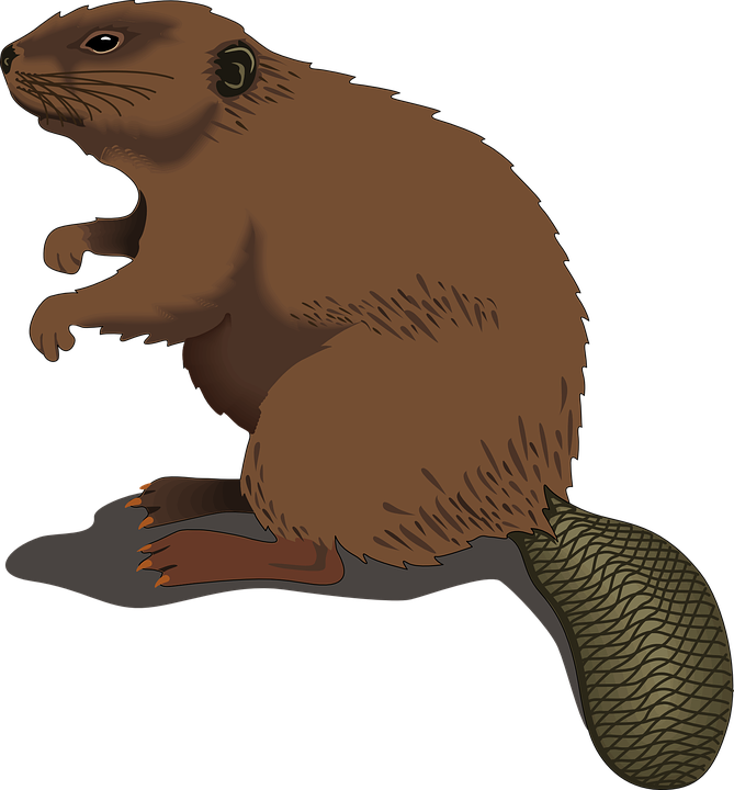 Beaver, Wood, Standing, Tail, Log