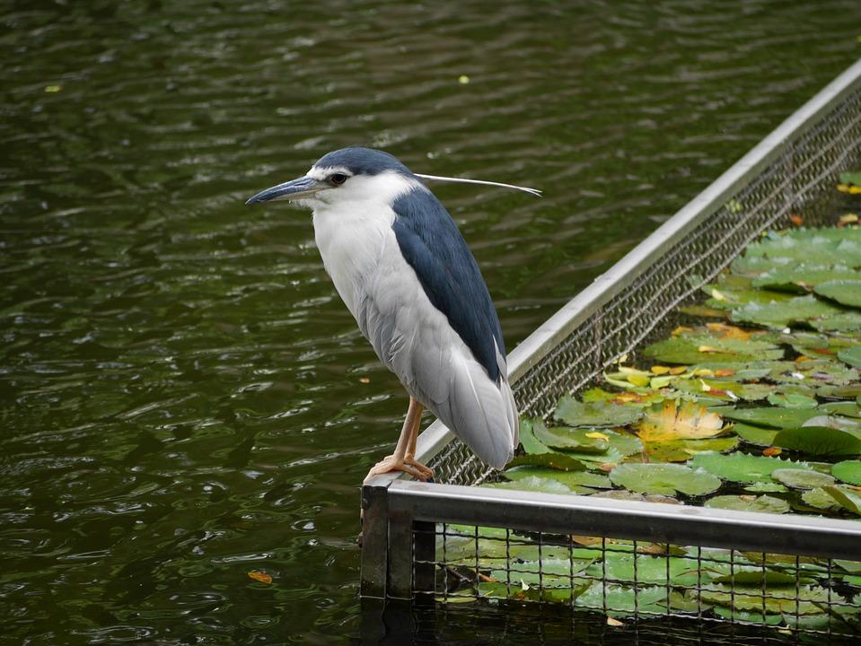 Bird, Water, Park, Nature, Taipei, Taiwan