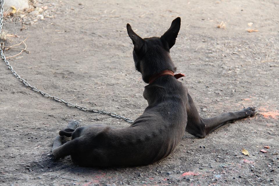 Taiwan, Dog, Black