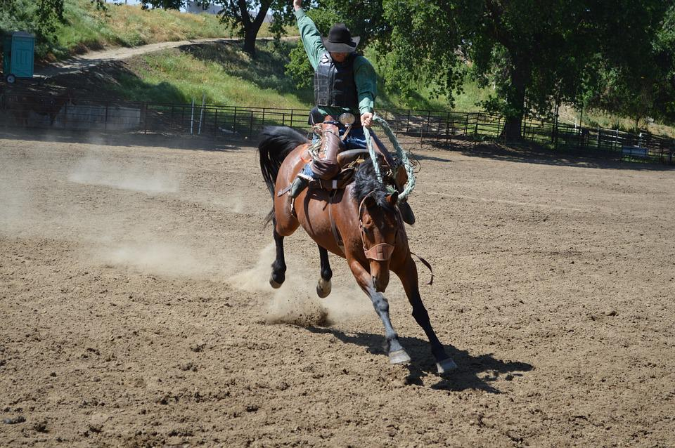 Talahi, Bronc Training, Ride One, Picture Two