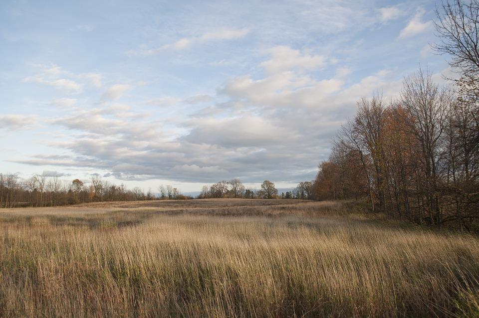 Field, Grass, Tall Grass, Sky, Blue, Clouds, Cloudy