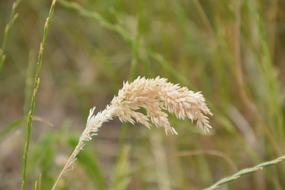 Grass, High, Tall Grass, Nature, France, Fields