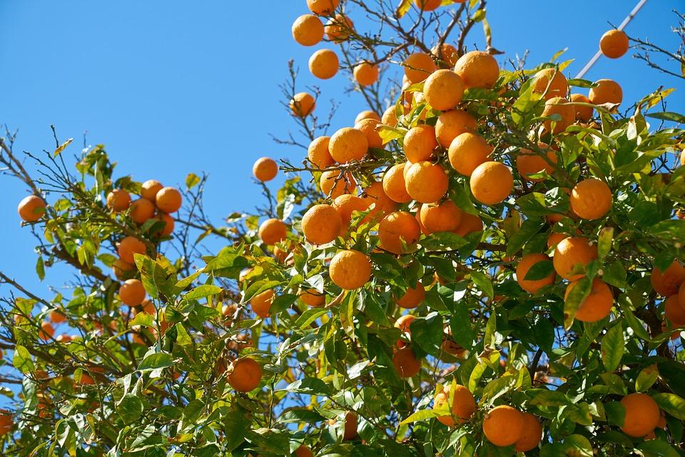 Tangerine, Fruit, Delicious, Orange, Food, Vitamins